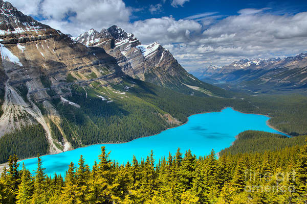 Photograph - Peyto Blue In The Forest by Adam Jewell