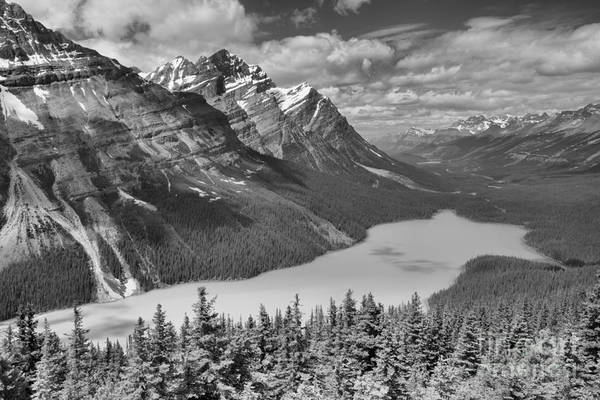 Photograph - Peyto Blue In The Forest Black And White by Adam Jewell
