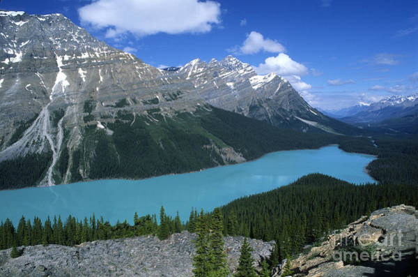 Peyto Lake Wall Art - Photograph - Peyto Lake Overlook by Sandra Bronstein