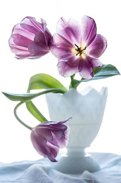 Purple Tulip Photograph - Phantom Spring  by Maggie Terlecki