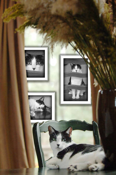Photograph - Phat Cat by Jill Reger