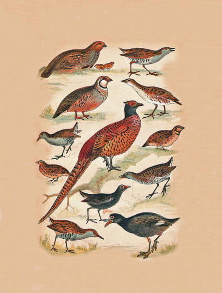 Mixed Media - Pheasant And More by Eric Kempson
