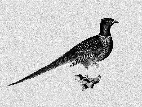 Pheasant Photograph - Pheasant by Mark Rogan