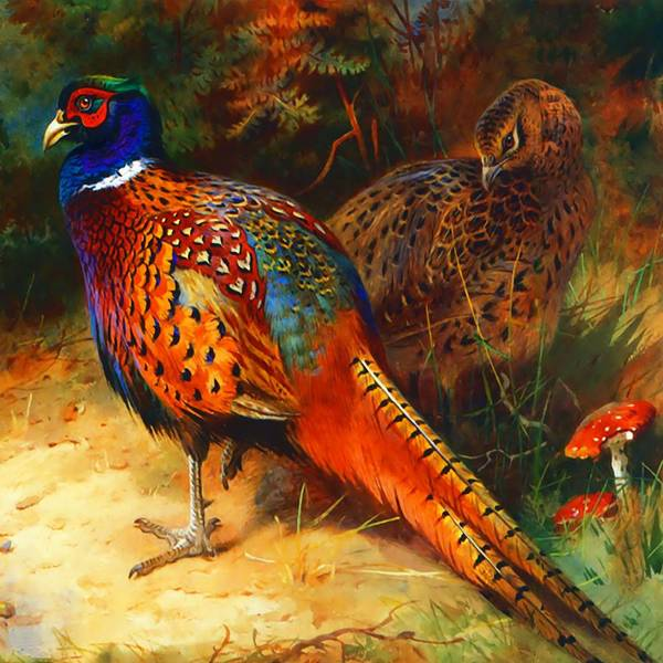 Pheasant Digital Art - Pheasant Pair by Raven SiJohn