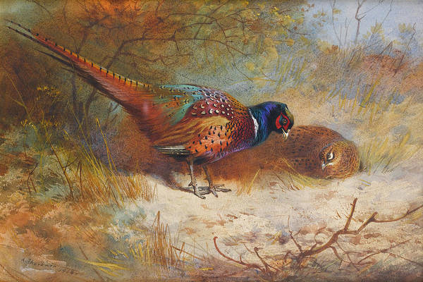Mixed Media - Pheasants By Thorburn by Archibald Thorburn