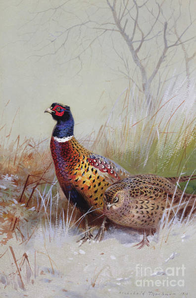Bird In Tree Wall Art - Painting - Pheasants In The Snow by Archibald Thorburn