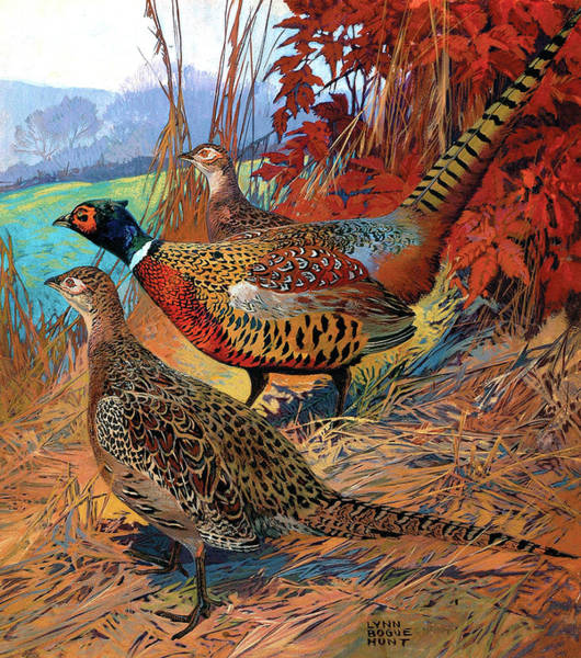 Painting - Pheasants by Lynn Bogue Hunt