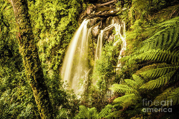 Rain Forest Photograph - Philosopher Falls, Western Tasmania by Jorgo Photography - Wall Art Gallery