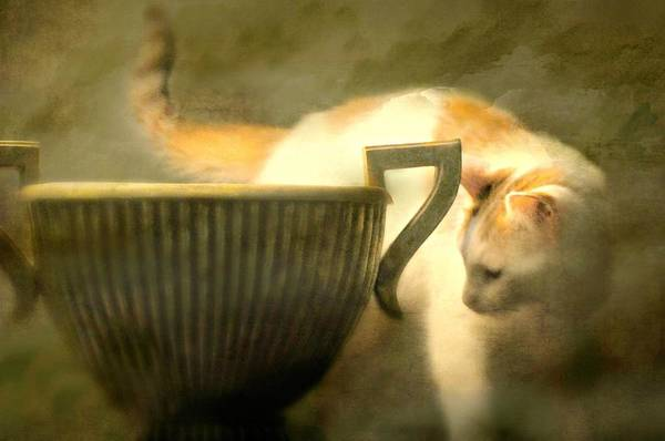 Orange Tabby Photograph - Philosophy by Diana Angstadt