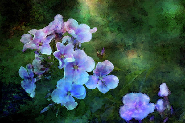 Photograph - Phlox Impression From The Shadows 1353 Idp_2 by Steven Ward