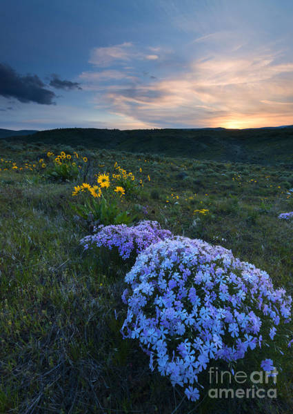 Wall Art - Photograph - Phlox Sunset by Mike Dawson