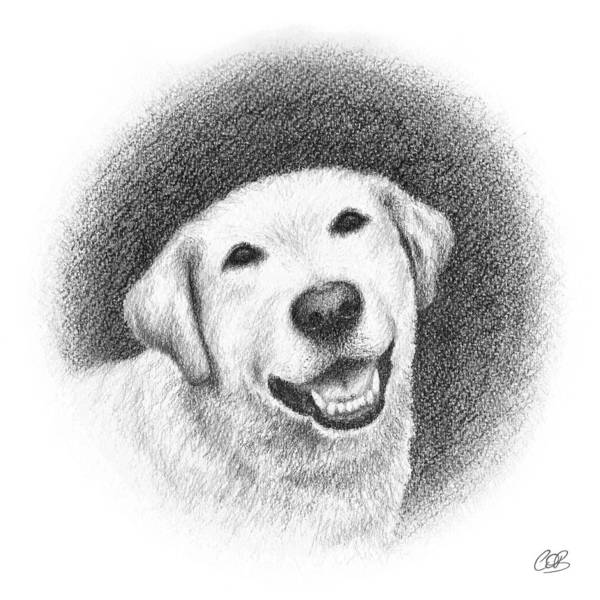Golden Retriever Drawing - Phoebe by Conor O'Brien