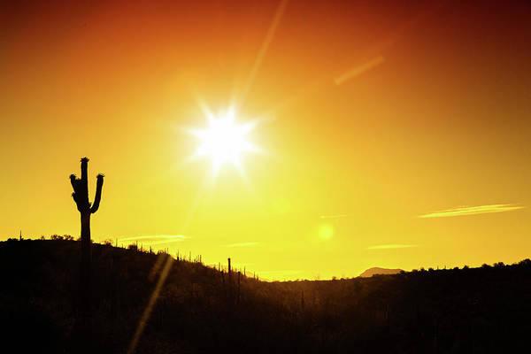 Photograph - Phoenix Arizona Desert Sunset Silhouette by Susan Schmitz