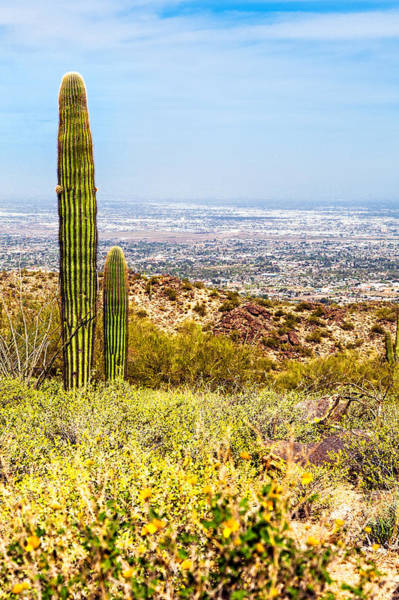 Wall Art - Photograph - Phoenix Arizona Desert With Saguaro Cactus And Cityscape by Susan Schmitz
