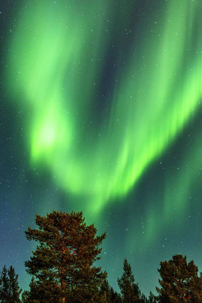 Photograph - Phoenix Rising Northern Lights Karasjok Norway by Adam Rainoff
