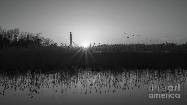 Cape May Lighthouse Photograph - Phragmites Reflections Bw by Michael Ver Sprill