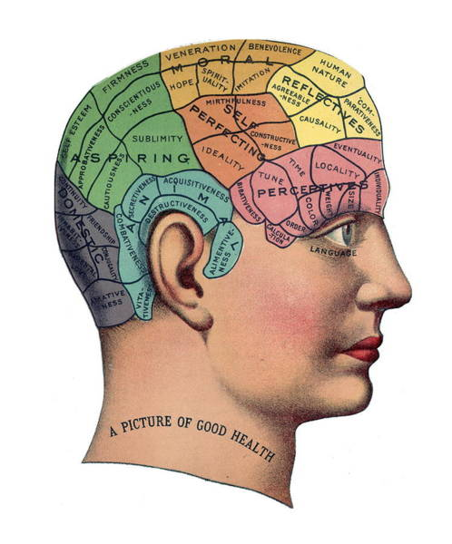 Brain Painting - Phrenological Chart by American School
