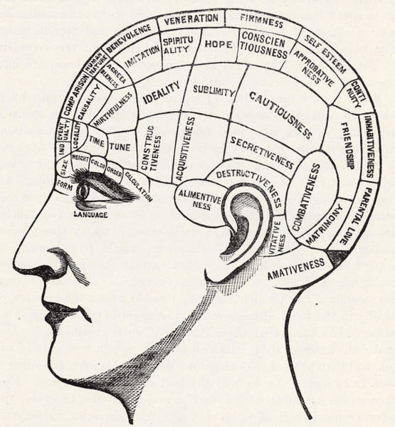Brain Painting - Phrenology by English School