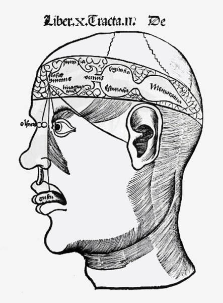 Thought Drawing - Phrenology by French School