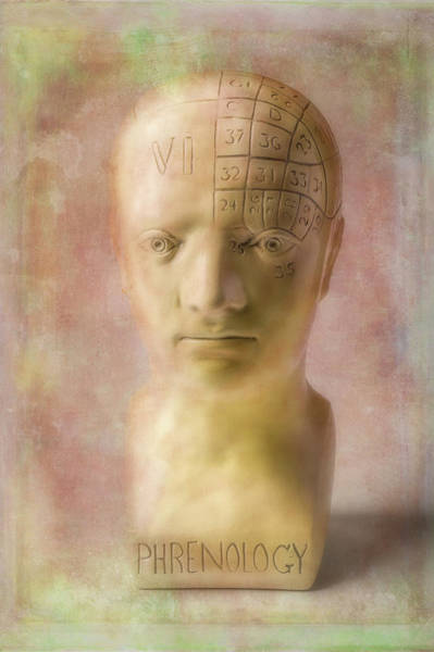 Wall Art - Photograph - Phrenology Head by Garry Gay