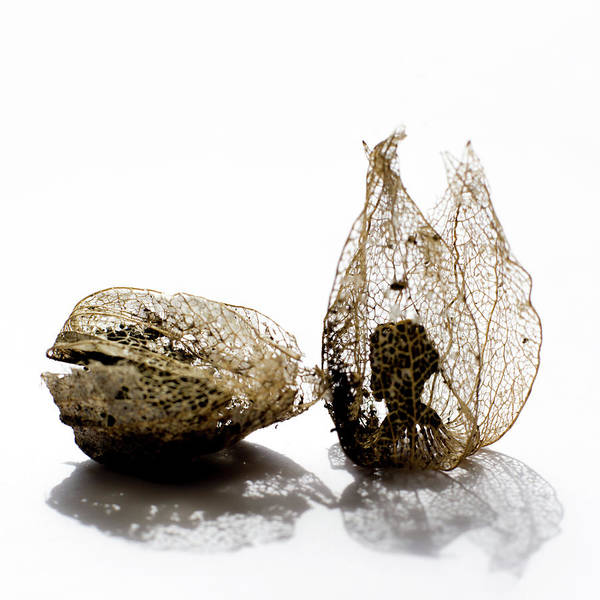 Wall Art - Photograph - Physalis Alkekengi by Stelios Kleanthous