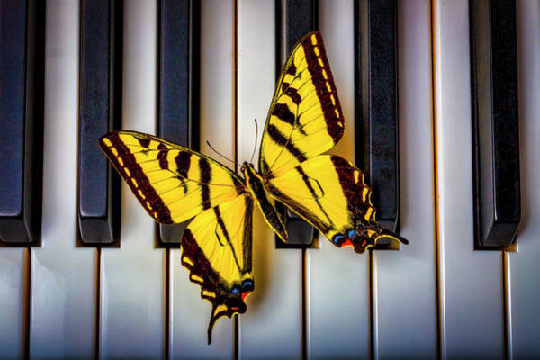 Wall Art - Photograph - Piano Butterfly by Garry Gay
