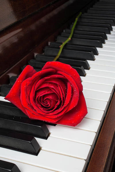 Wet Rose Wall Art - Photograph - Piano Romance by Garry Gay