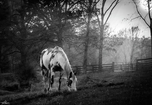 Photograph - Picante' In Black And White by Philip Rispin