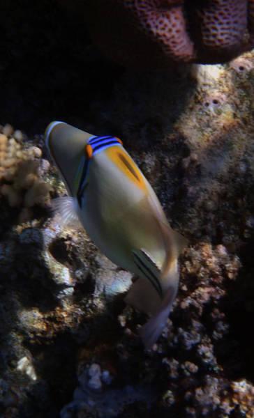 Photograph - Picassofish In The Cave by Johanna Hurmerinta