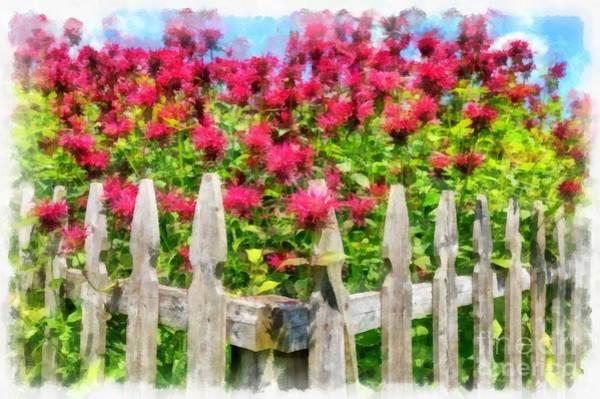 Wall Art - Digital Art - Picket Fence Garden Bee Balm Watercolor by Edward Fielding