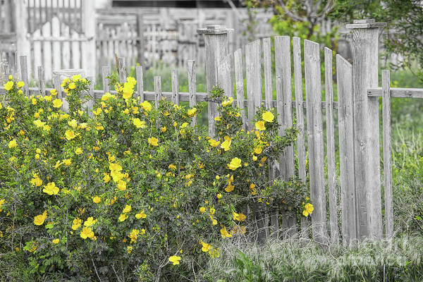 Photograph - Picket Fence by Jim Garrison