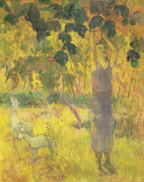 1897 Painting - Picking Fruit From A Tree by Paul Gauguin