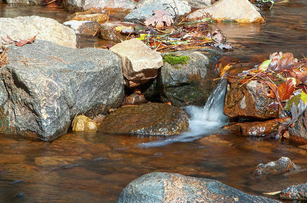 Photograph - Pickle Trickle by Steve Stuller