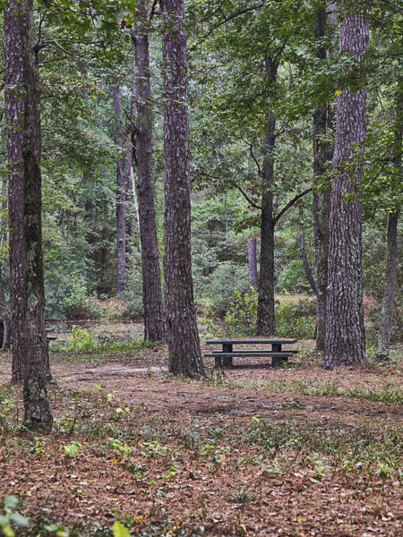 Photograph - Picnic Table In A Forest by Charles McKelroy