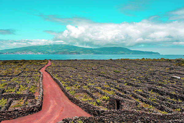 Photograph - Pico Island Vineyard 01 by Edgar Laureano
