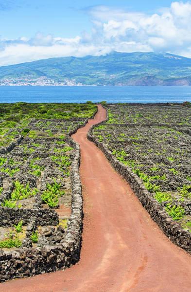Photograph - Pico Island Vineyard by Edgar Laureano