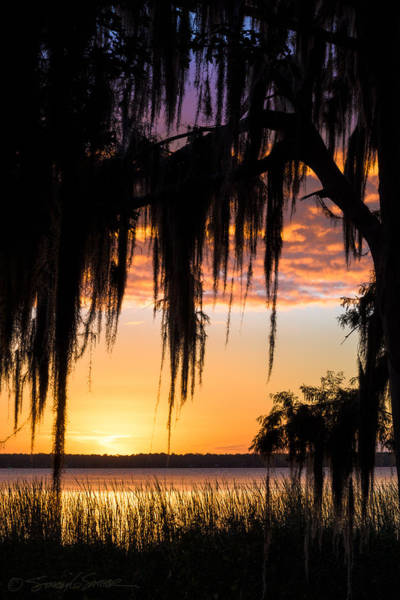 Photograph - Picolata Sunset Moss by Stacey Sather