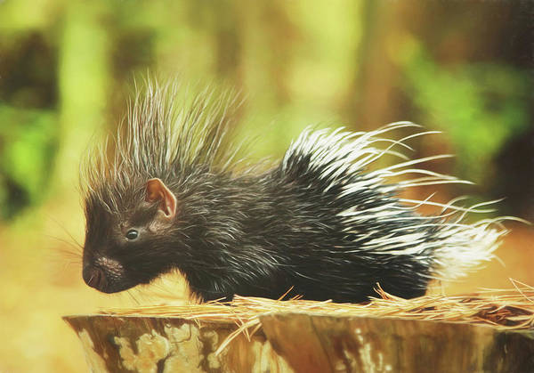 Wall Art - Photograph - Picture Perfect Porcupine Painting by Carrie Ann Grippo-Pike