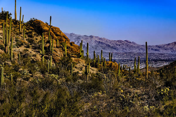 Photograph - Picture Rocks No. 27 by Mark Myhaver