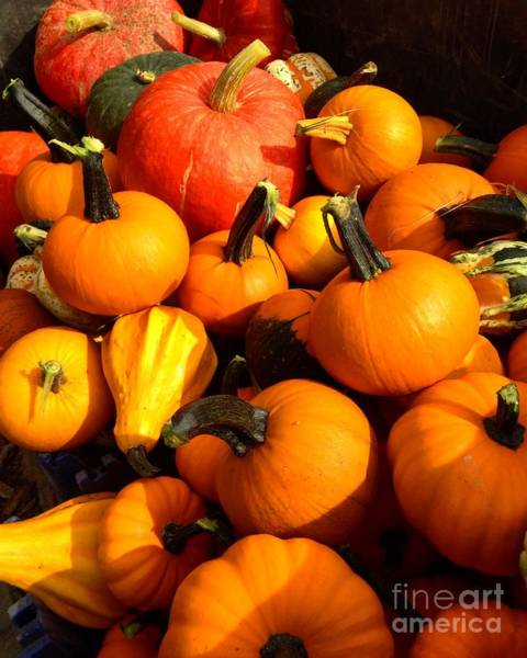 Photograph - Pie Pumpkins And Specialty Pumpkins by Angela Rath
