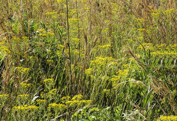 Photograph - Piedmont Prairie Detail by Jim Dollar