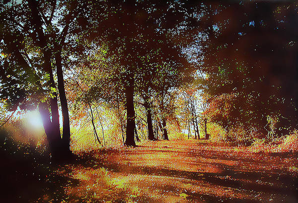 Photograph - Piermont Autumn by Roger Bester