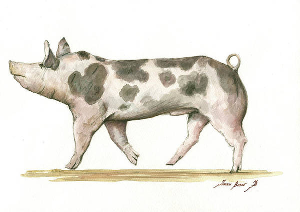 Pig Painting - Pietrain Pig by Juan Bosco