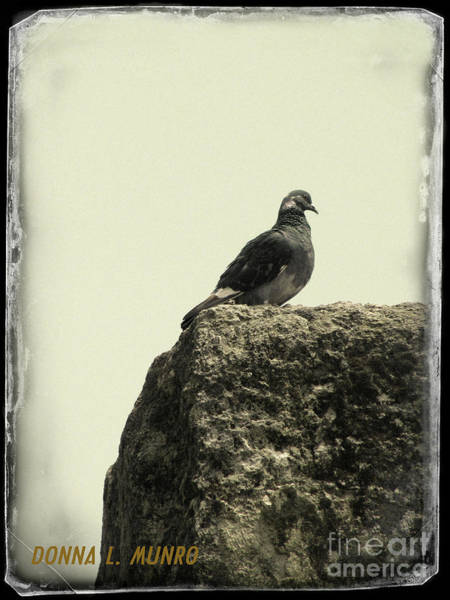 Photograph - Pigeon In Israel by Donna L Munro