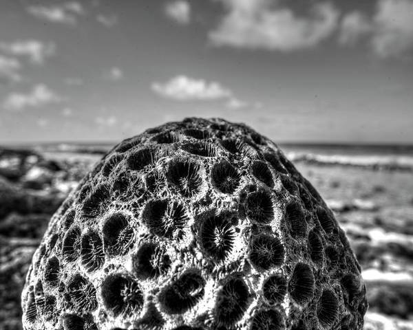 Photograph - Pigeon Island Egg Shaped Coral Saint Lucia St Lucia Black And White by Toby McGuire