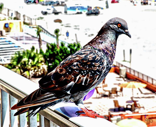 Photograph - Pigeon Power by Gina O'Brien