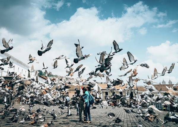 Photograph - Pigeons In Plaza San Francisco by Alexandre Rotenberg