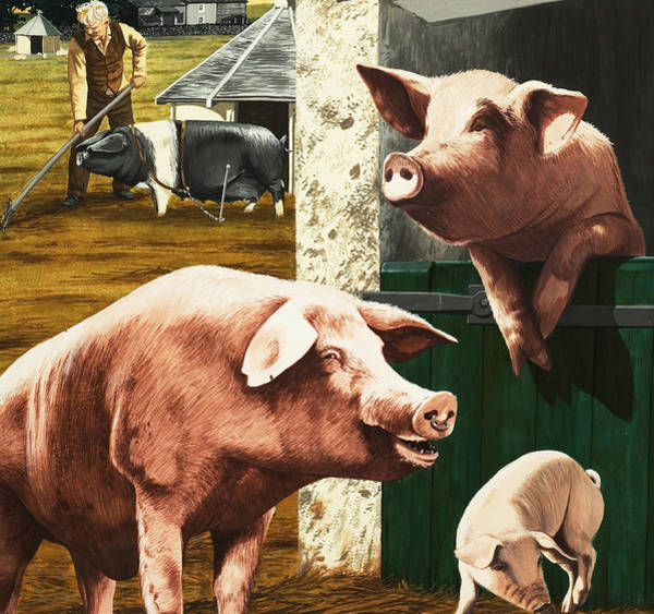 Family Farm Painting - Pigs by Janet Blakeley