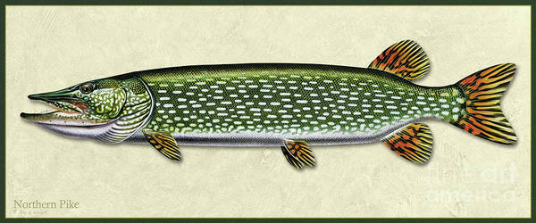 Painting - Pike Id by Jon Q Wright