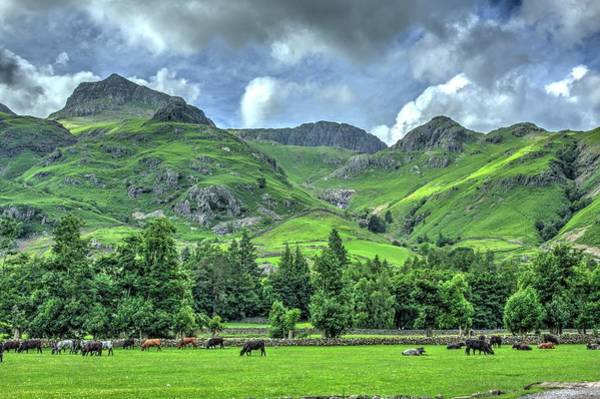 Wall Art - Photograph - Pikes And Cows by Chris Whittle